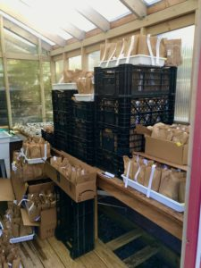 Cornell plant lab partners with Children's Garden to deliver gardening kits to local kids